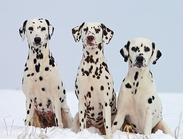 多頭飼いで犬たちの個性に触れる!そのメリット・デメリットとは?