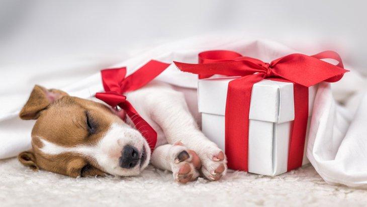 犬好きの友だちに贈りたいプレゼント8選
