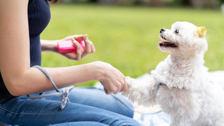 犬からバカにされる人の共通点3選!仲良くなるにはどんなスキンシップを取るべき?