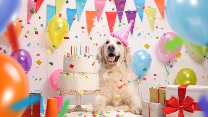 毎年の大事なイベント!愛犬のお誕生日のお祝いする方法4つ