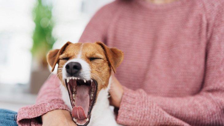 人から犬へのあくびの伝染は共感の表れではない【研究結果】