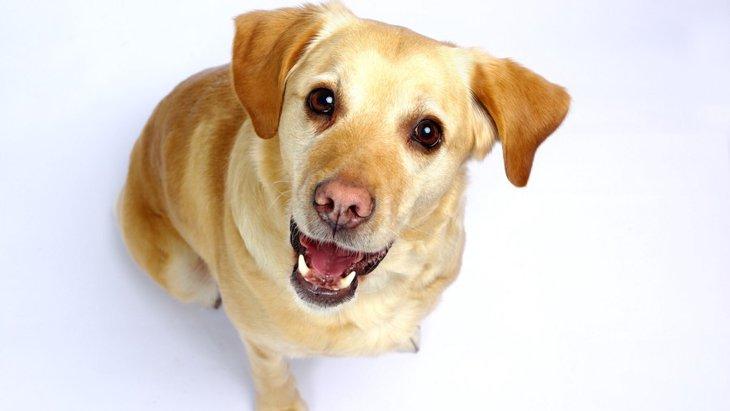 愛犬を「要求犬」にしてしまう可能性がある飼い主行動