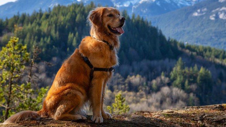 なぜ犬は高いところを怖がるのか?