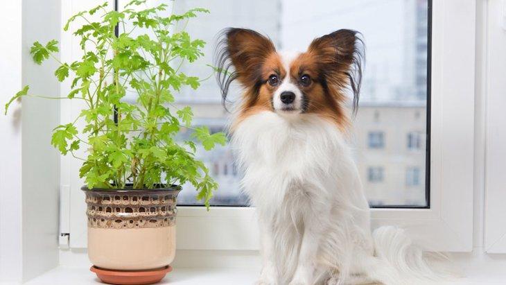 犬がいても室内に置ける観葉植物4つ