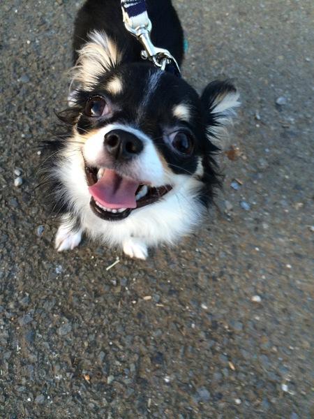 犬のお散歩中のトイレマナーで気を付けること。マナーグッズ紹介