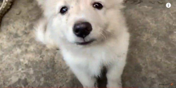 【ネパール】トマト畑でどろんこになってはしゃぐ子犬が可愛すぎる