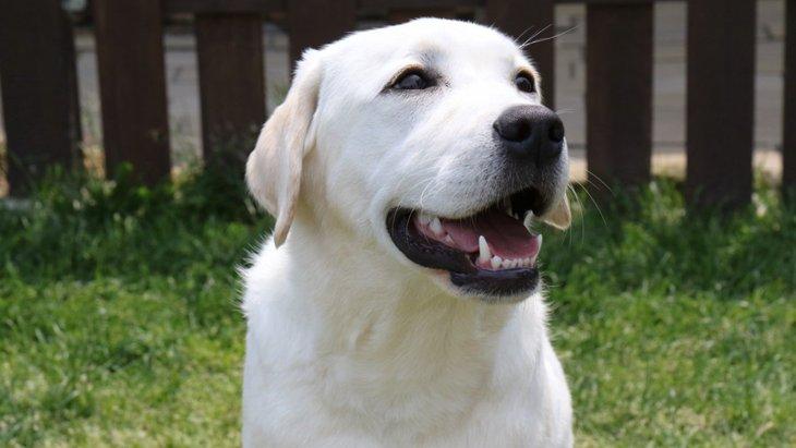 ある家族の決断…『愛犬の安楽死』という選択