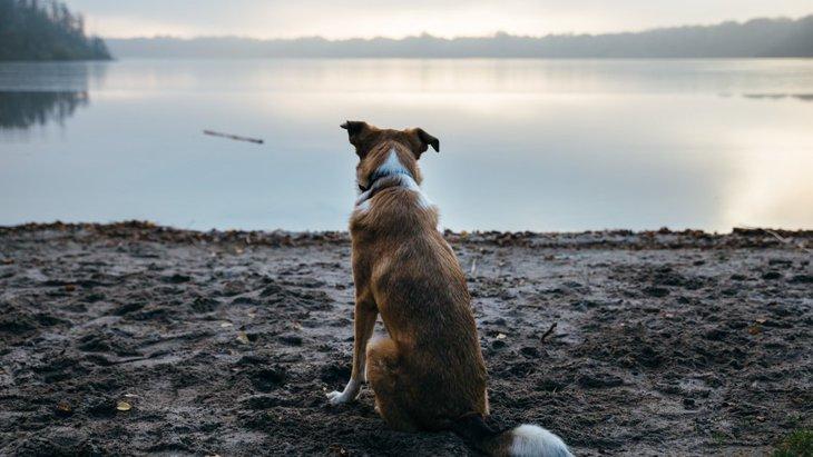 ネガティブな意味を持つ犬の仕草5選