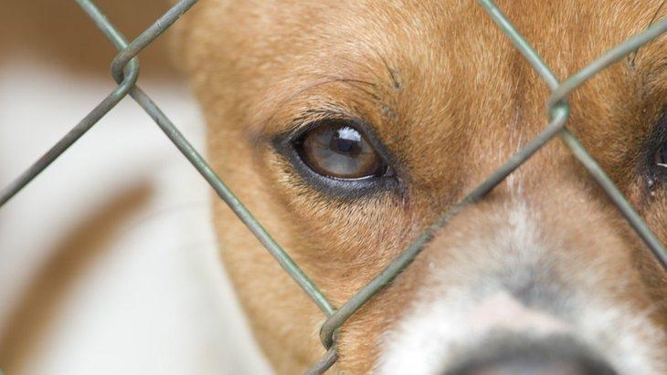 犬は捨てられたとしても、大好きだった飼い主のことをちゃんと覚えている