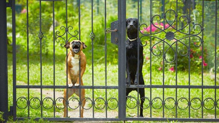 犬が『来客の時に吠えてしまう…』!3つの理由とやめさせるための対処法