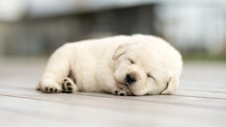 犬が寝てるとき、絶対に注意すべき3つのこと