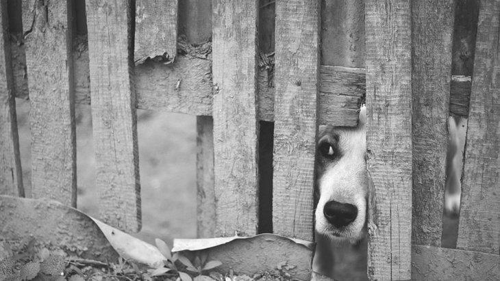 犬が脱走をする気持ちや対策について