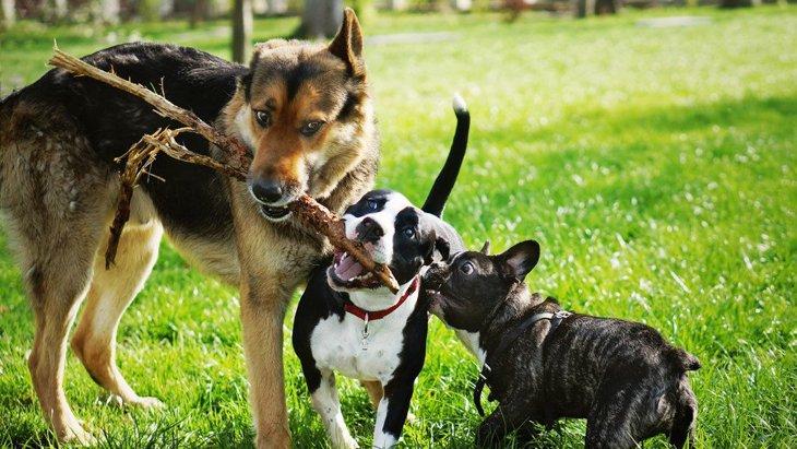 よその犬から嫌われてしまう犬の特徴3選