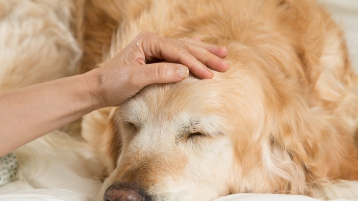 犬も自律神経失調症になる?原因や症状、治療や予防法まで