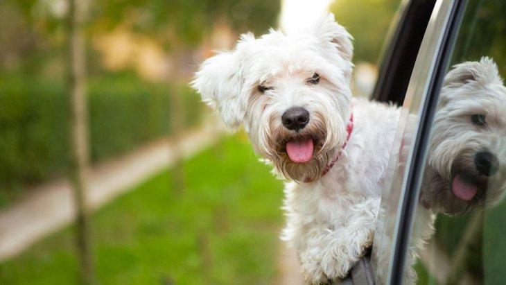 犬を車に乗せる時に絶対NGな行為3つ