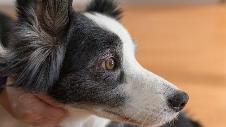どうして犬は知能が高いのか