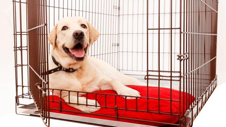 大型犬用サークルのおすすめランキングTOP5!