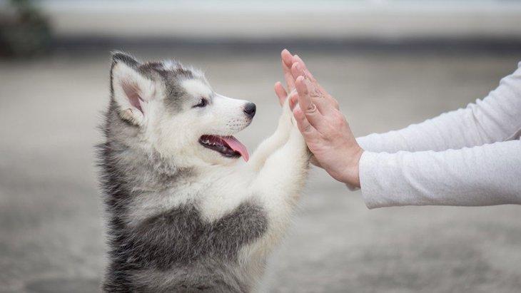 犬がする『あざとい仕草』7選