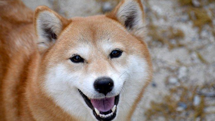 犬が『嬉しそうな顔』をしている時の心理3選