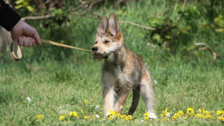 犬が『突然動かなくなる』心理4選!散歩中などに固まる理由は?