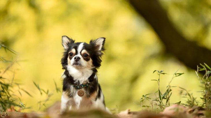 犬に絶対食べさせてはいけない『秋の食材』3選