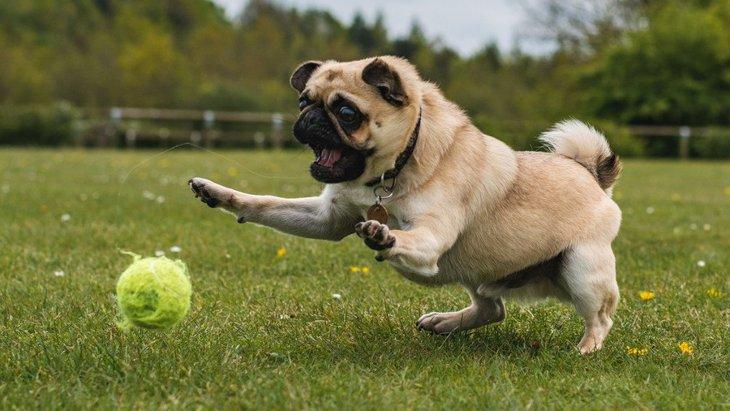 あるある?『運動音痴』な犬がよくする6つの行動
