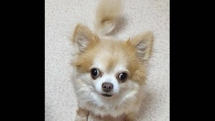 保護犬だった愛犬との出逢いと別れ。別の犬と思えるほど素敵な表情に一変しました!