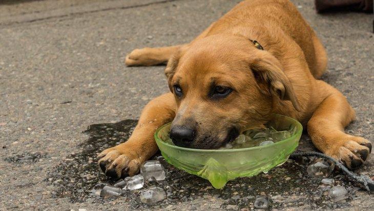ペットを「外飼い」する時に考えられるリスクとは?
