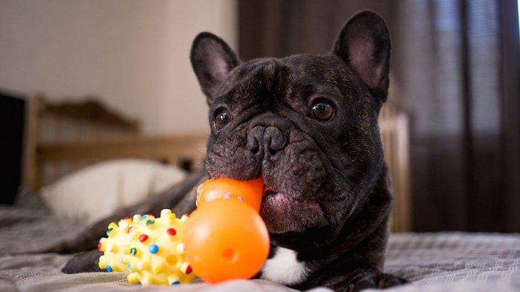 愛犬に「お片付け」を教えることはできる?