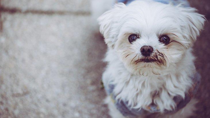犬は「初めての場所やもの」にストレスを感じやすい?