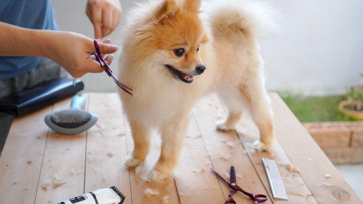 犬の毛を短くしすぎる『危険性』5選!役割や愛犬の気持ちを考えたトリミングを!