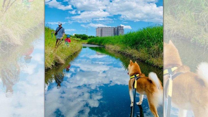 どうなってるの?幻想的な雰囲気の中で佇む柴犬さん奇跡の1枚