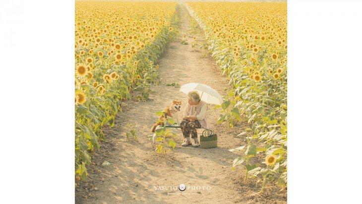 【話題】ひまわり畑とおばあちゃんと柴犬と。祖母グラフィーが胸に染みる