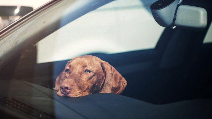 犬の死亡率が高い事故3つ