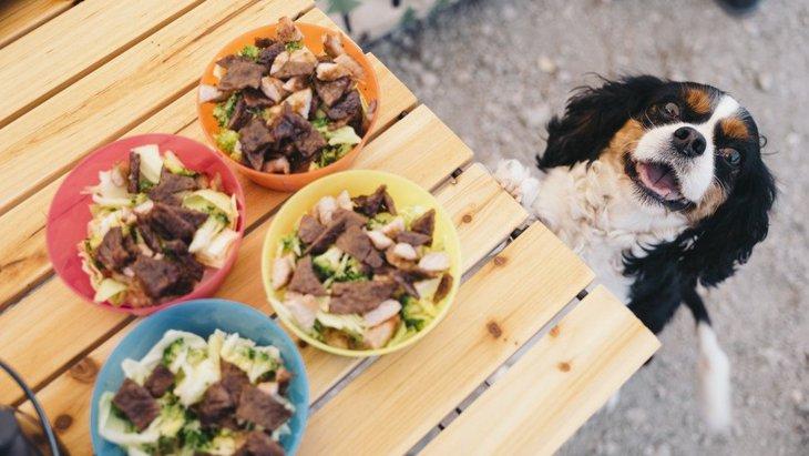 欲しがるとついつい…。犬に人間の食べ物を与えるリスク4つ