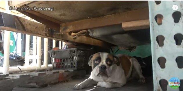 8ヵ月間も飼い主を待っていた…引っ越しで置き去りにされた犬