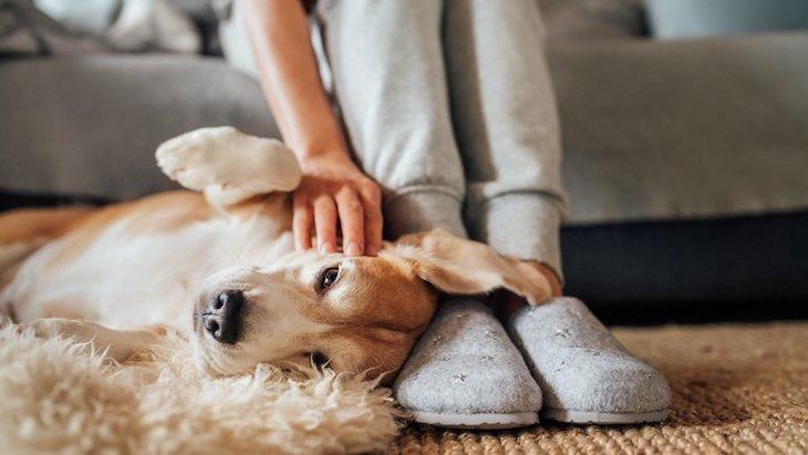 犬が『人の足』に体を擦ってくる時の心理4つ