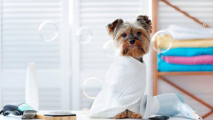 犬を飼っている人がケモノ臭くなる理由と消臭方法