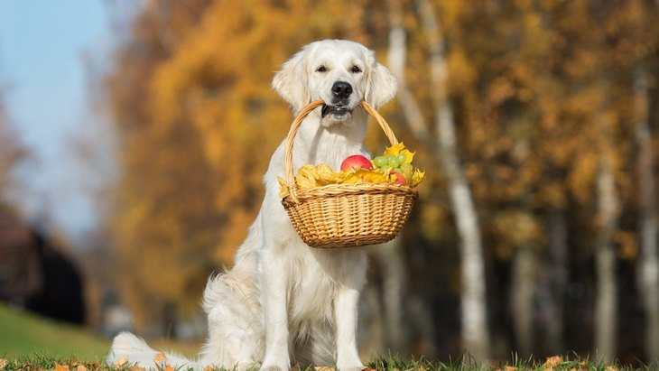 犬に与えていいフルーツいけないフルーツとその栄養素