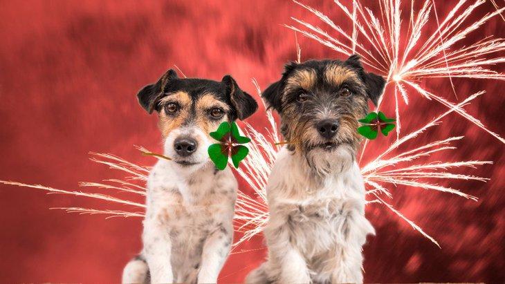 犬と一緒に花火大会!気を付けるべきこと5つ