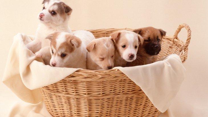 人気の『犬の名前』ランキングTOP10!どう付けるのがベストなの?