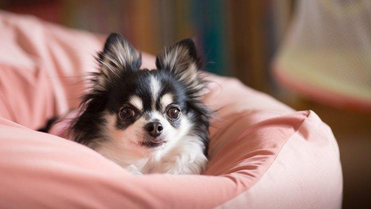 犬に『大きな音』がNGな理由3選!意識すべき生活音や和らげるためのコツ