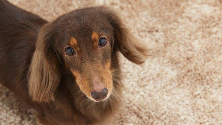 犬が特定の人にうれしょんをする原因と対処法