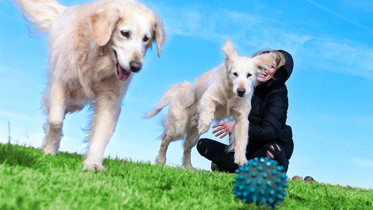 やってみよう!犬のモチベーションをあげる方法3つ