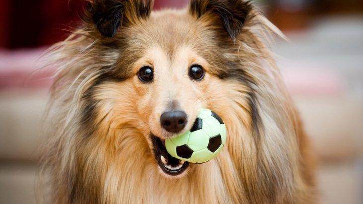 犬は自分の身体と周囲の物との関係を理解しているという研究結果