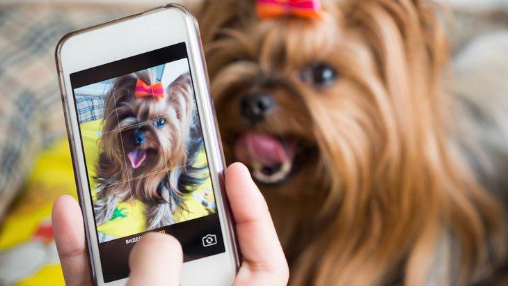 カメラ初心者でもうまく愛犬を撮りたい!iPhoneでの撮影方法やコツ