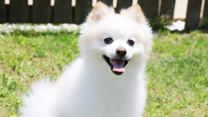 犬がしっぽを振りながら吠える心理3つ
