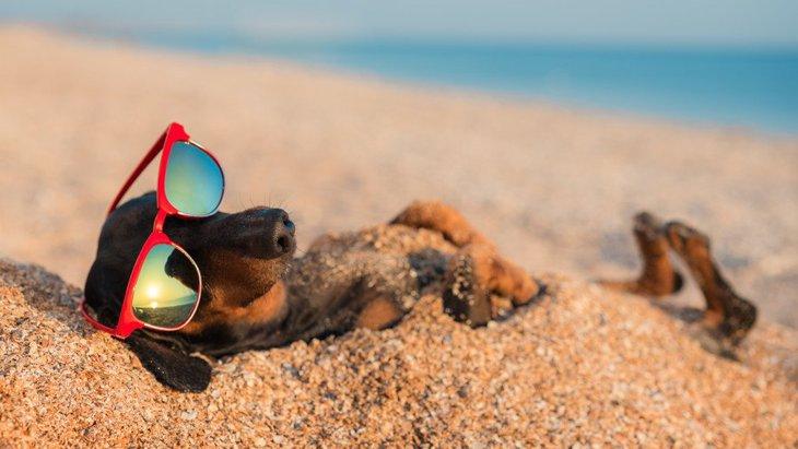 犬の夏のお留守番における絶対NG行為4つ