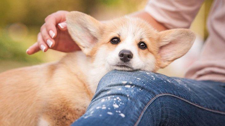愛情表現?犬が飼い主の身体にあごを乗せる心理4つ