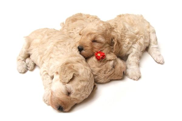 犬の寿命について 大切な家族の一生